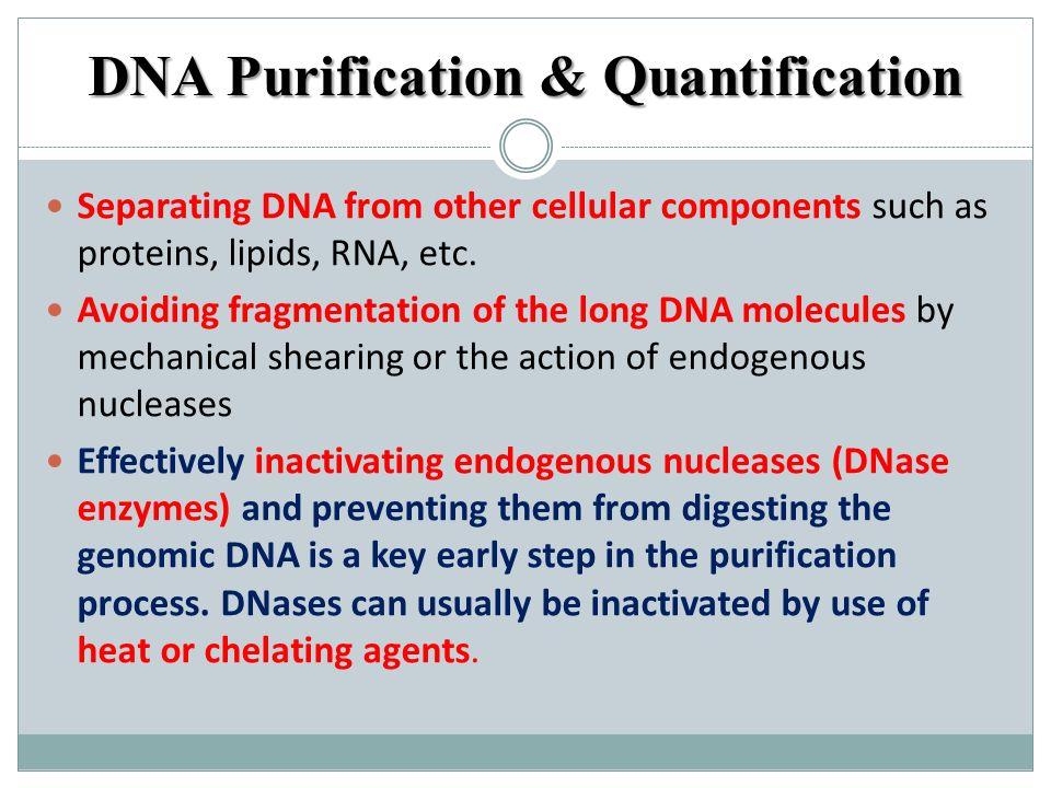 DNA Purification & Quantification