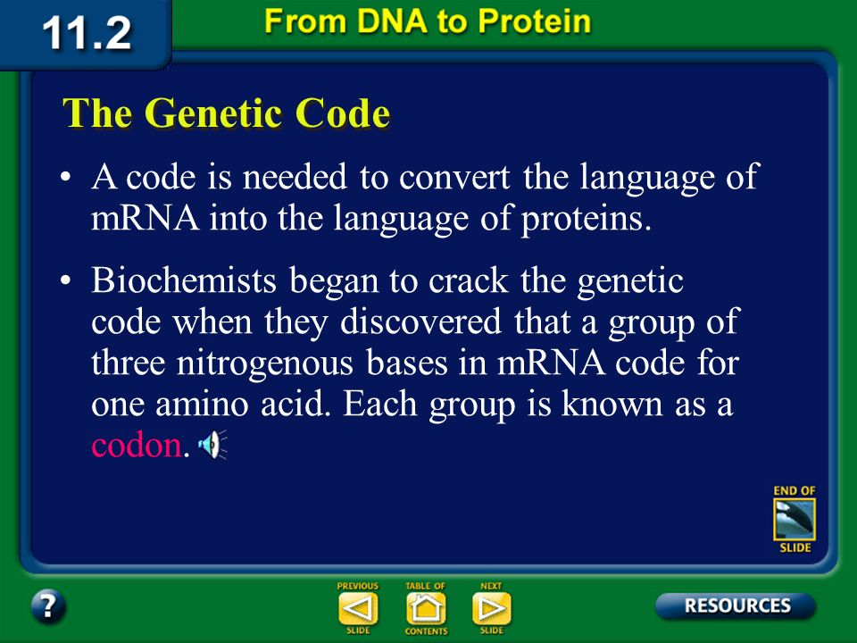 The Genetic Code A code is needed to convert the language of mRNA into the language of proteins.