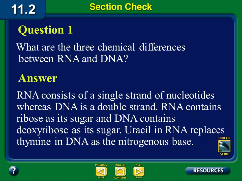Question 1 What are the three chemical differences between RNA and DNA Answer.