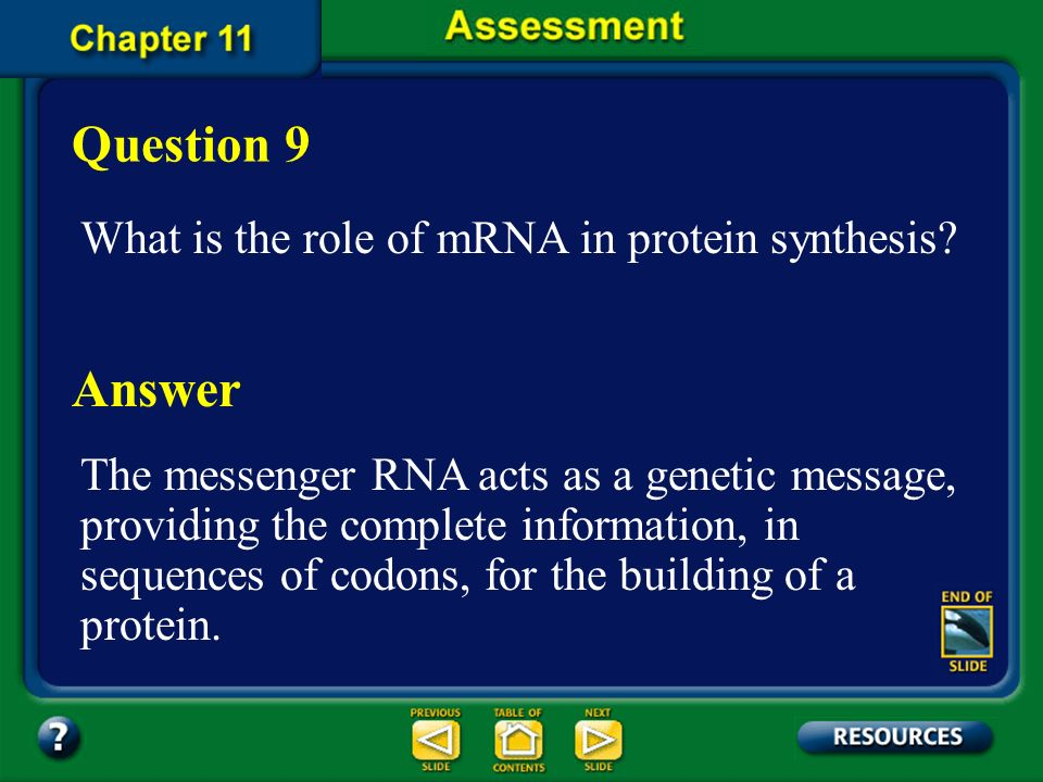 Question 9 Answer What is the role of mRNA in protein synthesis