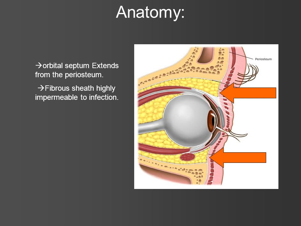 Anatomy: orbital septum Extends from the periosteum.
