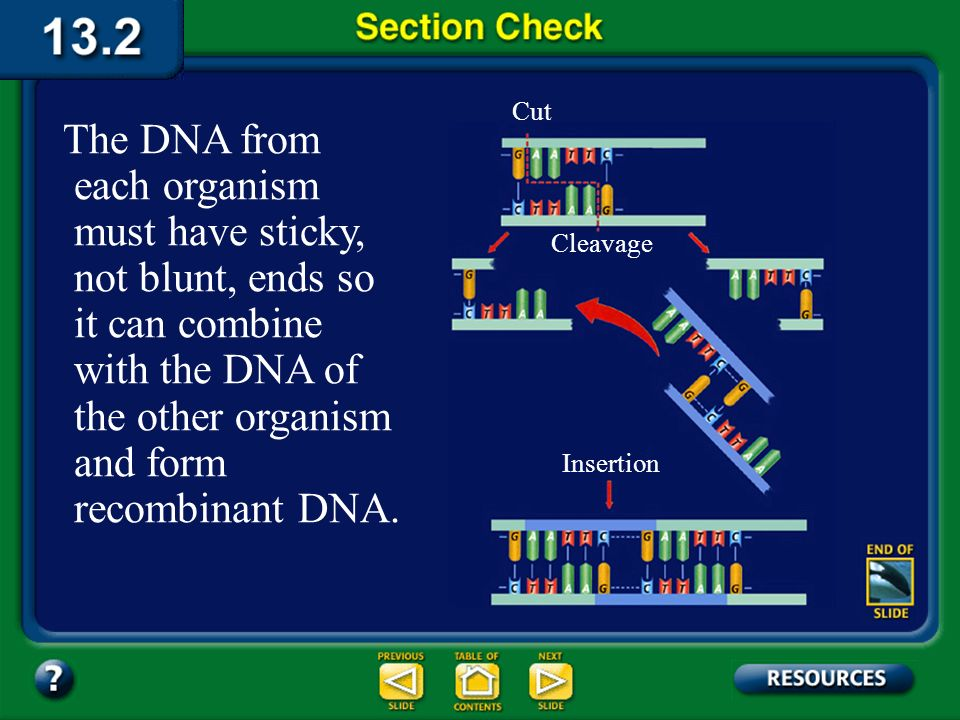 Cut The DNA from each organism must have sticky, not blunt, ends so it can combine with the DNA of the other organism and form recombinant DNA.