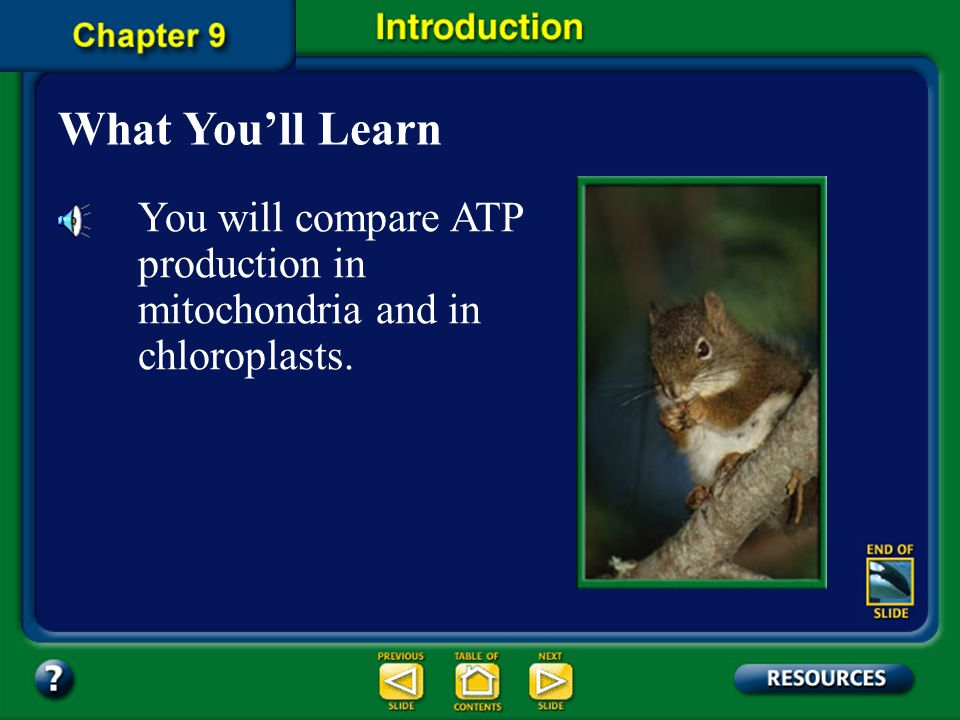 What You'll Learn You will compare ATP production in mitochondria and in chloroplasts.