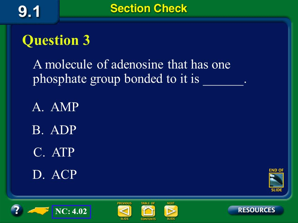 Question 3 A molecule of adenosine that has one phosphate group bonded to it is ______. A. AMP. B. ADP.