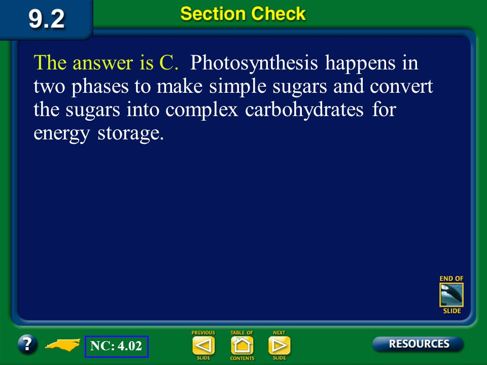 The answer is C. Photosynthesis happens in two phases to make simple sugars and convert the sugars into complex carbohydrates for energy storage.