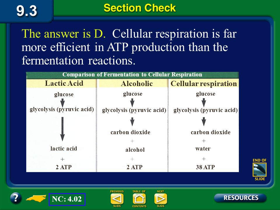 The answer is D. Cellular respiration is far more efficient in ATP production than the fermentation reactions.