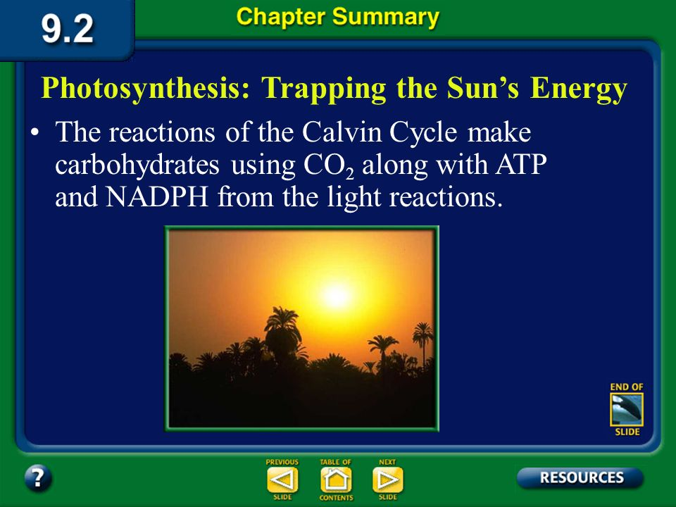 Photosynthesis: Trapping the Sun's Energy