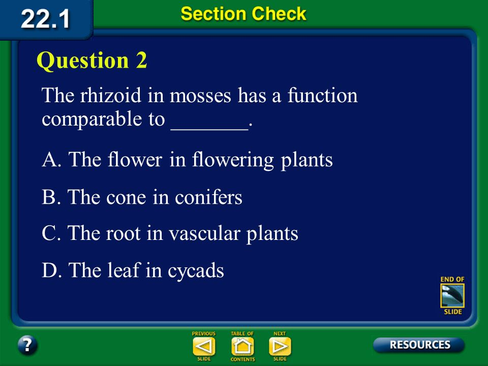 Question 2 The rhizoid in mosses has a function comparable to _______.