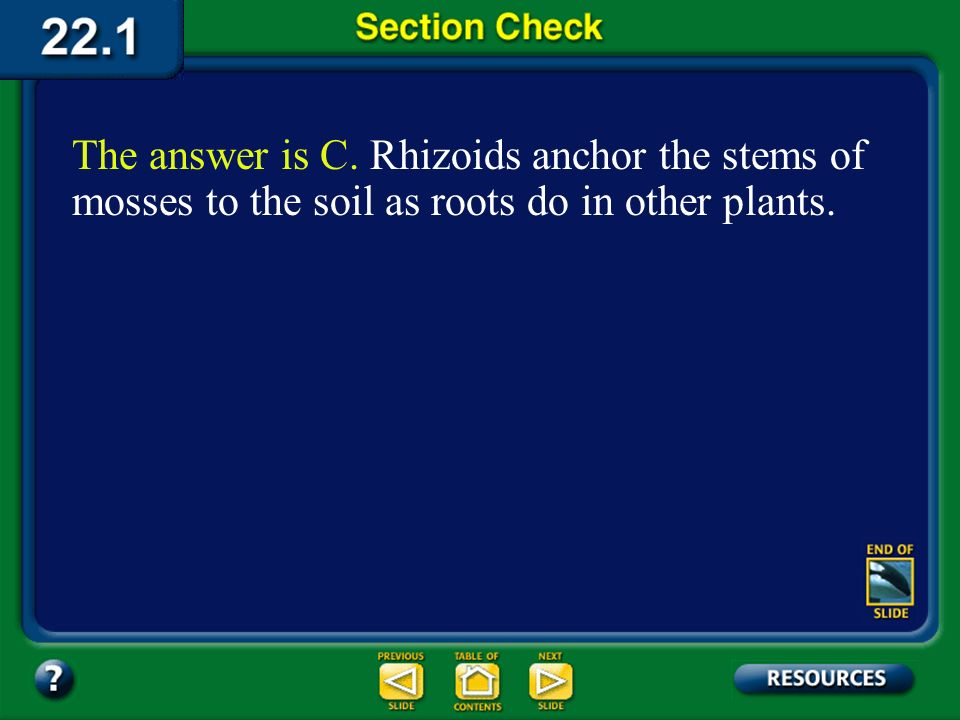 The answer is C. Rhizoids anchor the stems of mosses to the soil as roots do in other plants.