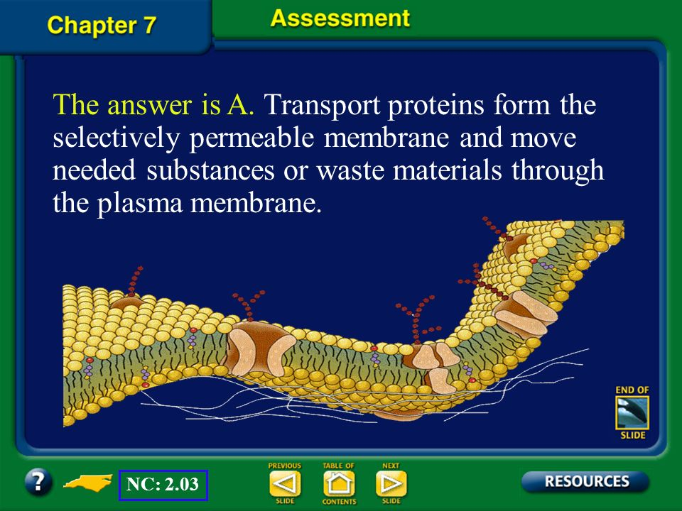 The answer is A. Transport proteins form the selectively permeable membrane and move needed substances or waste materials through the plasma membrane.