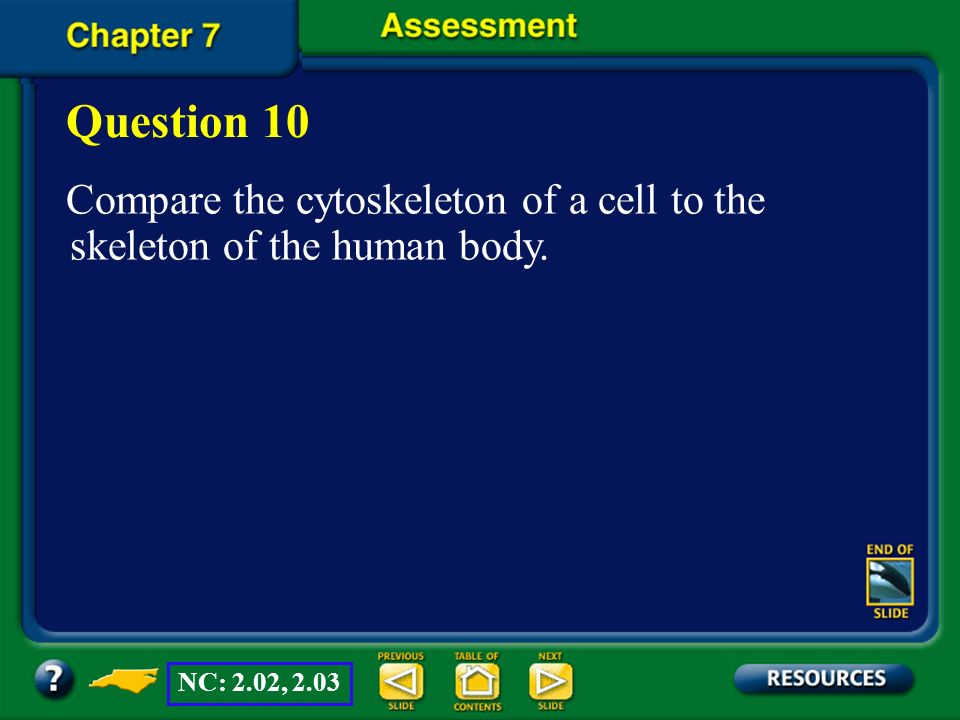 Question 10Compare the cytoskeleton of a cell to the skeleton of the human body.