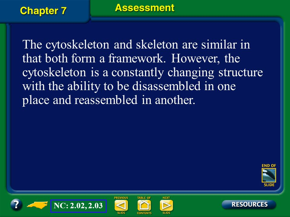 The cytoskeleton and skeleton are similar in that both form a framework. However, the cytoskeleton is a constantly changing structure with the ability to be disassembled in one place and reassembled in another.