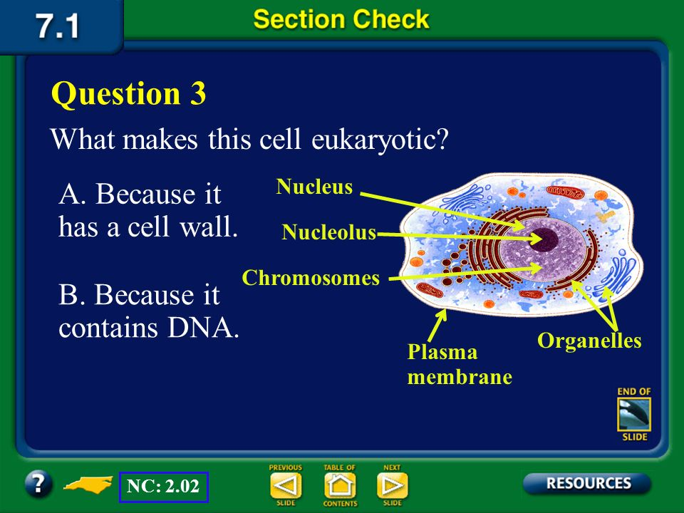 Question 3 What makes this cell eukaryotic