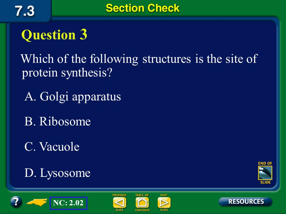 Question 3 Which of the following structures is the site of protein synthesis A. Golgi apparatus.