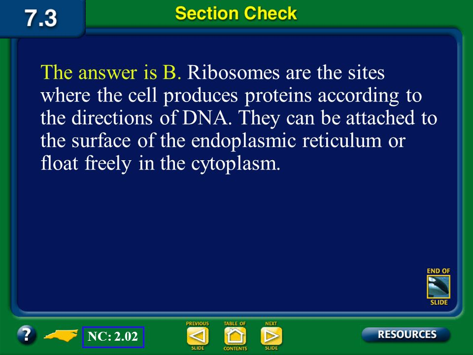 The answer is B. Ribosomes are the sites where the cell produces proteins according to the directions of DNA. They can be attached to the surface of the endoplasmic reticulum or float freely in the cytoplasm.