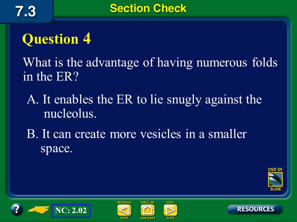 Question 4 What is the advantage of having numerous folds in the ER
