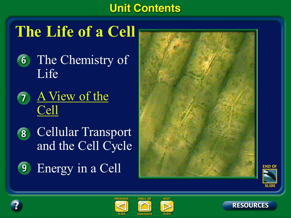 The Life of a Cell The Chemistry of Life A View of the Cell