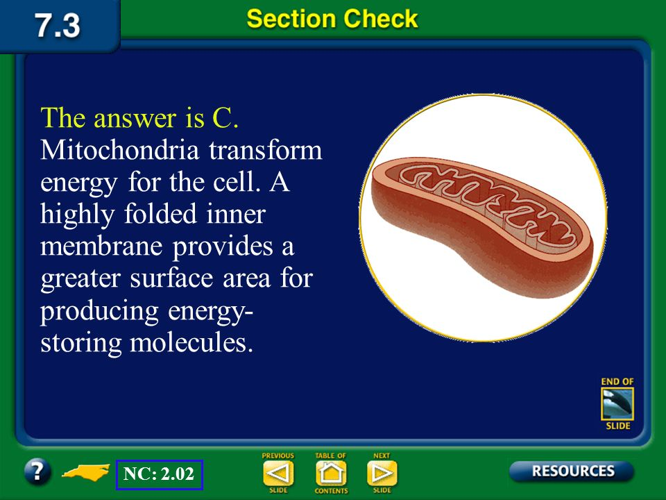 The answer is C. Mitochondria transform energy for the cell