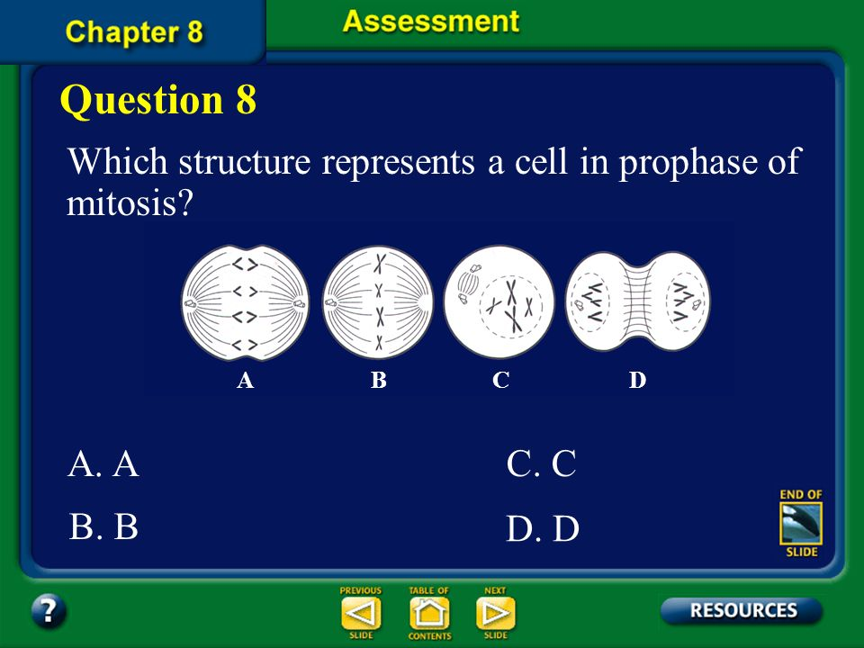 Question 8 Which structure represents a cell in prophase of mitosis