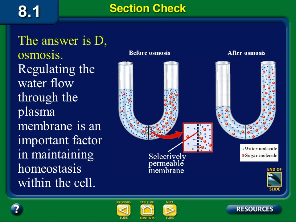 The answer is D, osmosis. Regulating the water flow through the plasma membrane is an important factor in maintaining homeostasis within the cell.