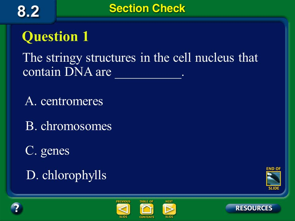 Question 1 The stringy structures in the cell nucleus that contain DNA are __________. A. centromeres.