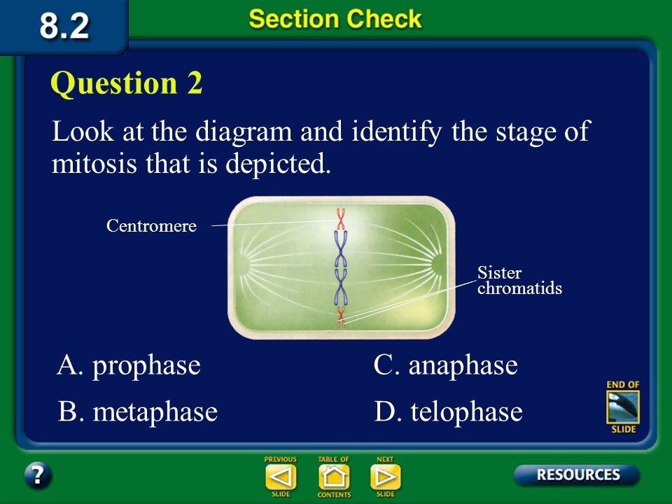 Question 2 Look at the diagram and identify the stage of mitosis that is depicted. Centromere. Sister chromatids.