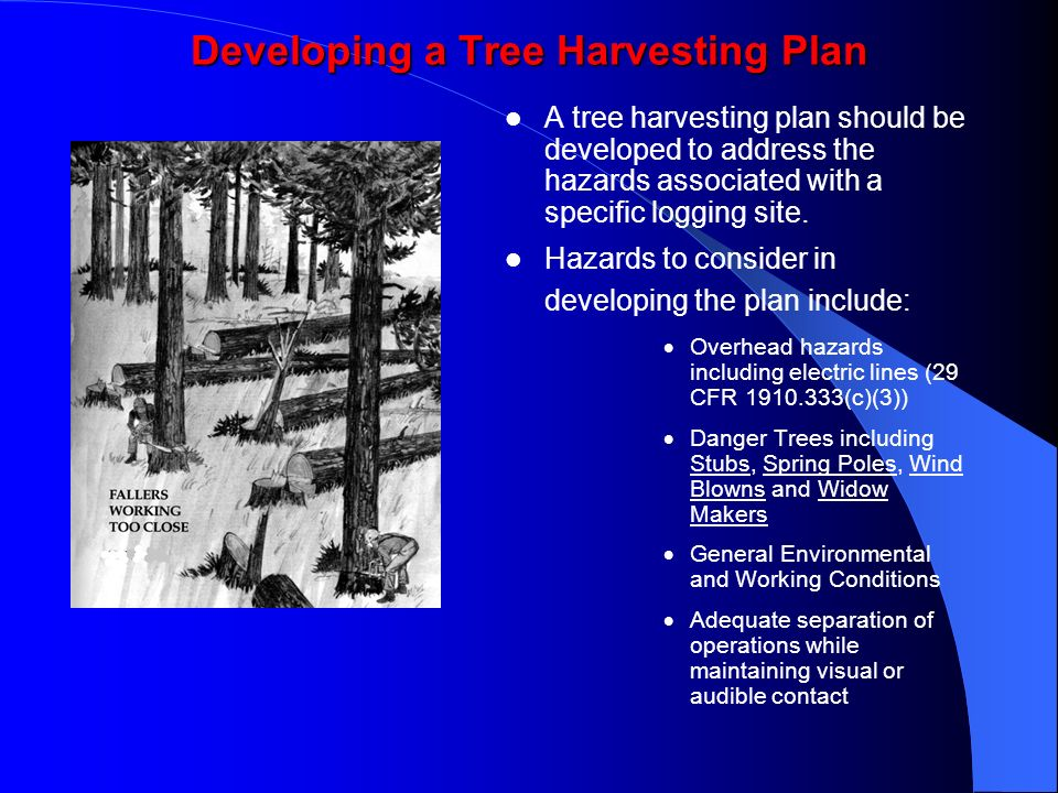 Developing a Tree Harvesting Plan