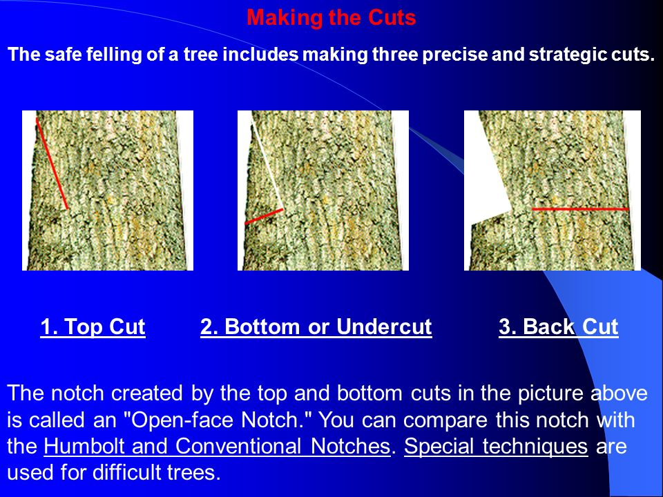 Making the Cuts 1. Top Cut 2. Bottom or Undercut 3. Back Cut
