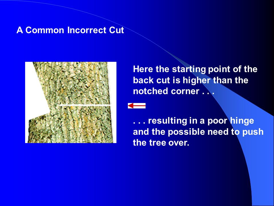 A Common Incorrect Cut Here the starting point of the back cut is higher than the notched corner . . .