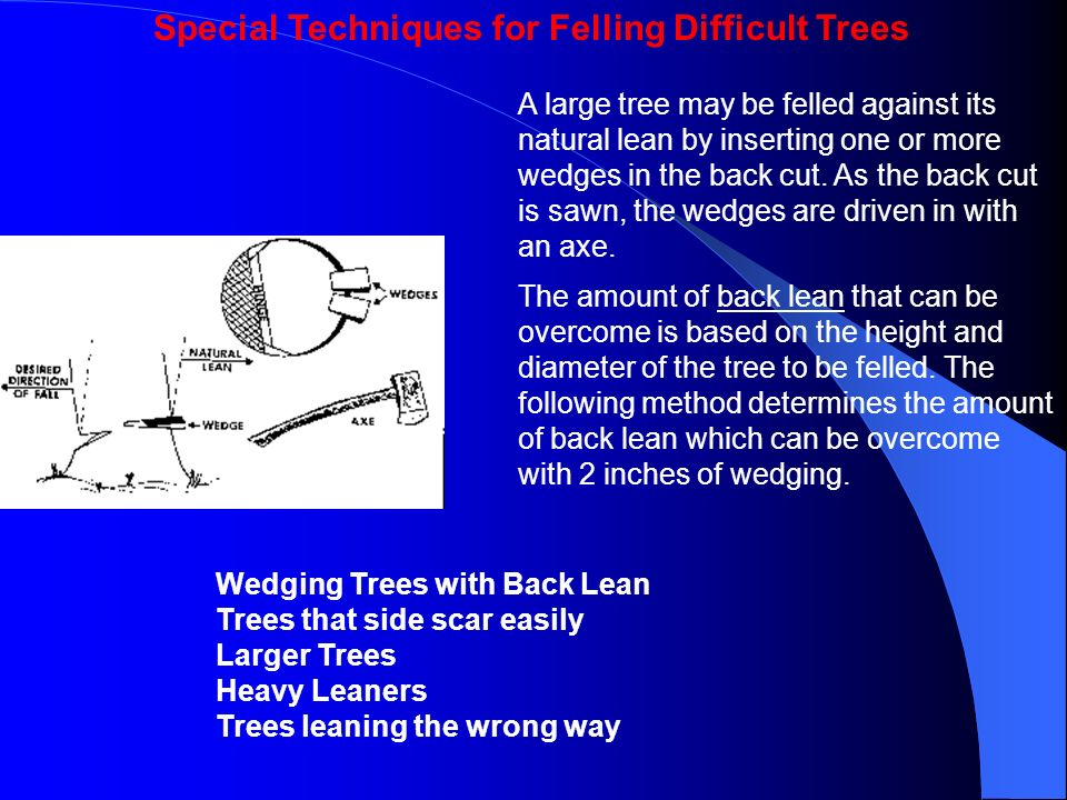 Special Techniques for Felling Difficult Trees