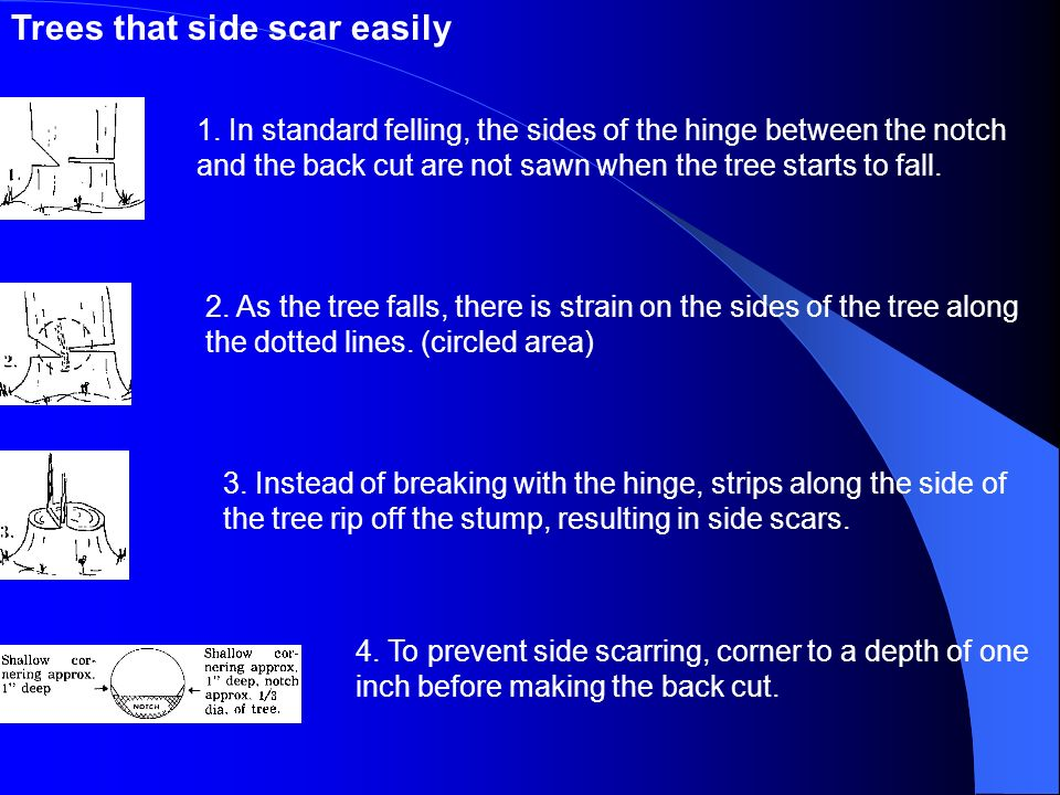 Trees that side scar easily
