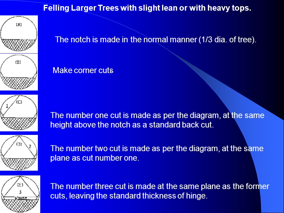 . Felling Larger Trees with slight lean or with heavy tops.