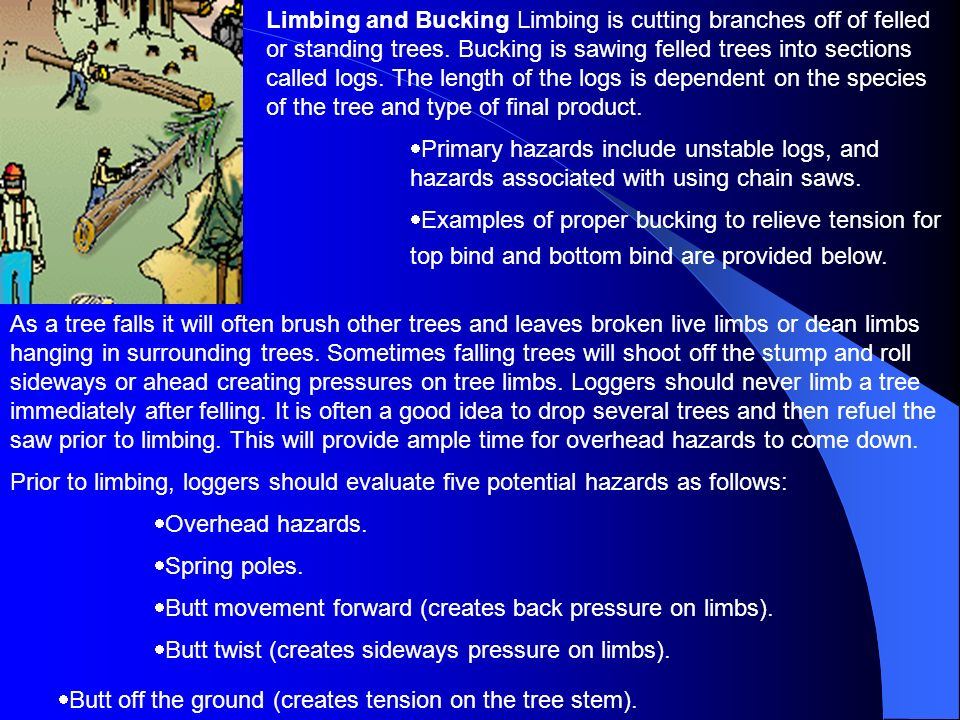 Limbing and Bucking Limbing is cutting branches off of felled or standing trees. Bucking is sawing felled trees into sections called logs. The length of the logs is dependent on the species of the tree and type of final product.