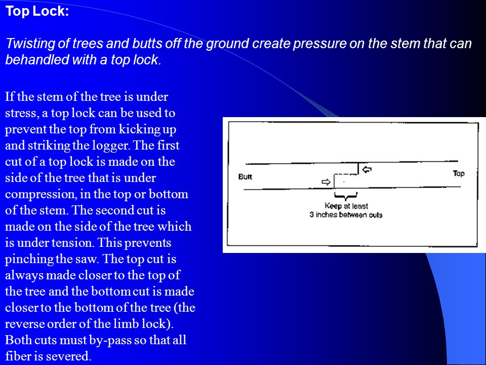 Top Lock: Twisting of trees and butts off the ground create pressure on the stem that can behandled with a top lock.