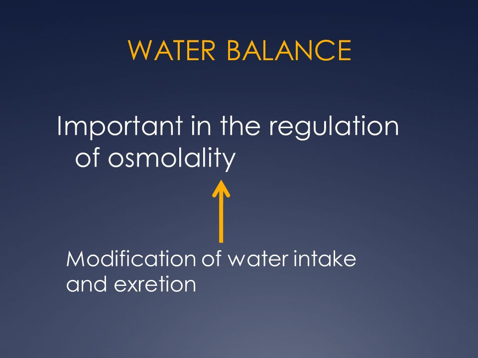 WATER BALANCE Important in the regulation of osmolality