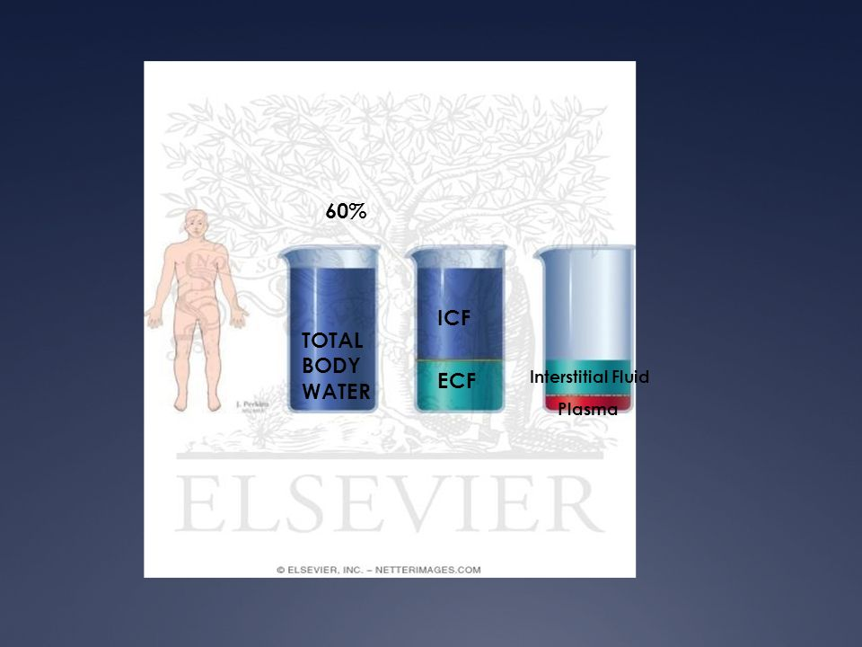 60% ICF TOTAL BODY WATER ECF Interstitial Fluid Plasma