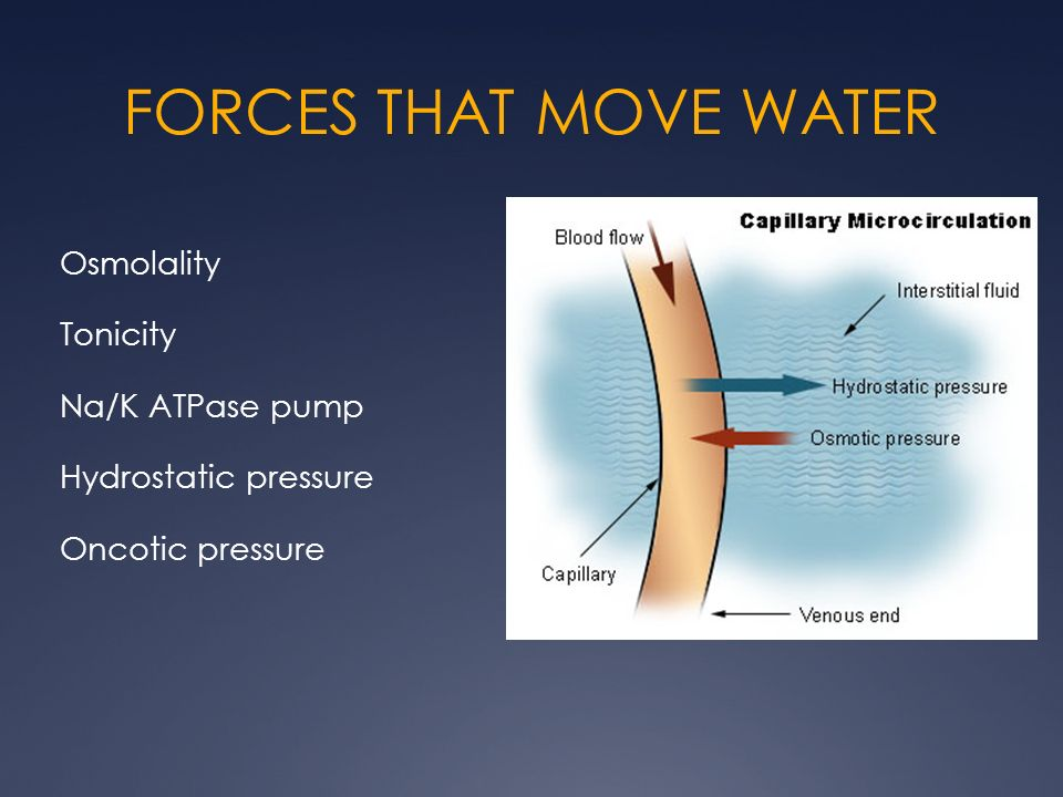 FORCES THAT MOVE WATER Osmolality Tonicity Na/K ATPase pump Hydrostatic pressure Oncotic pressure