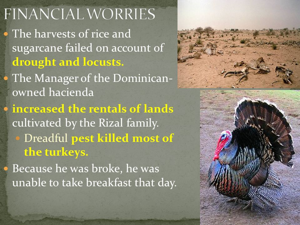 FINANCIAL WORRIES The harvests of rice and sugarcane failed on account of drought and locusts. The Manager of the Dominican- owned hacienda.
