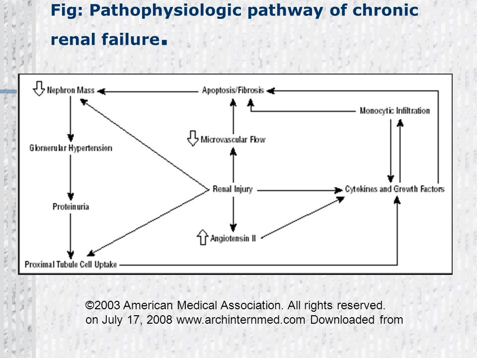 Fig: Pathophysiologic pathway of chronic renal failure.