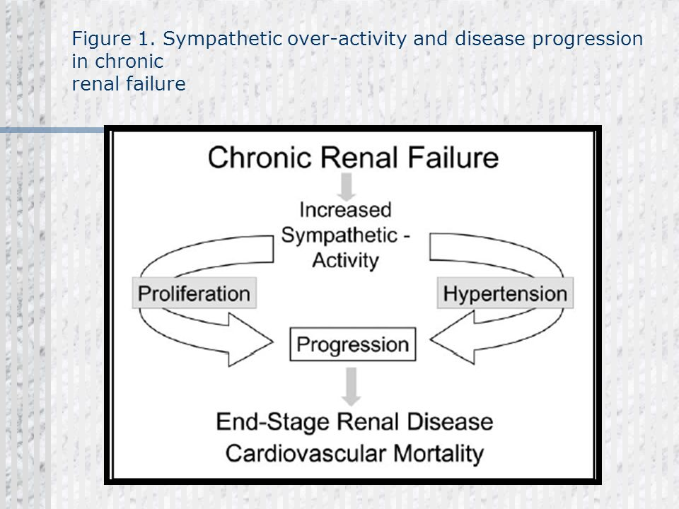Figure 1. Sympathetic over-activity and disease progression in chronic renal failure