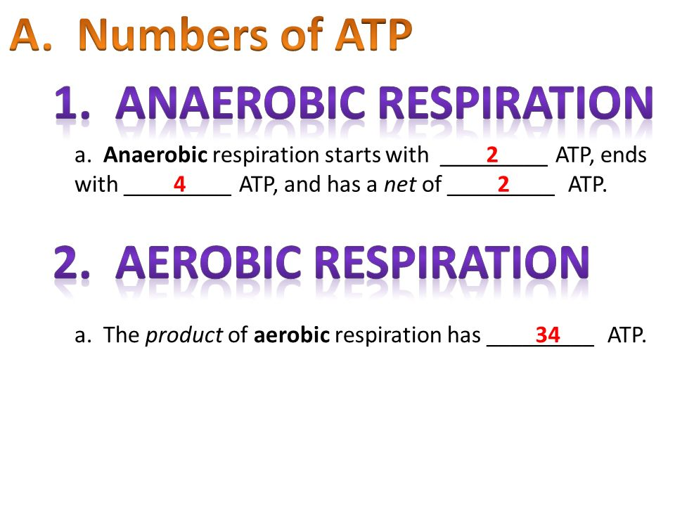 1. Anaerobic Respiration
