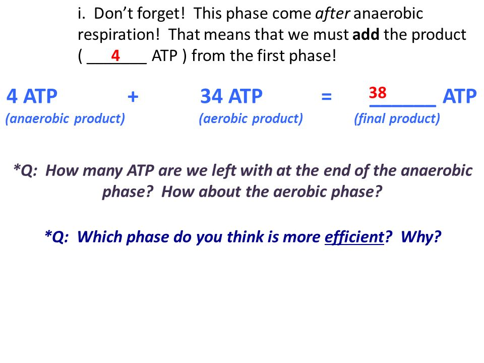 *Q: Which phase do you think is more efficient Why