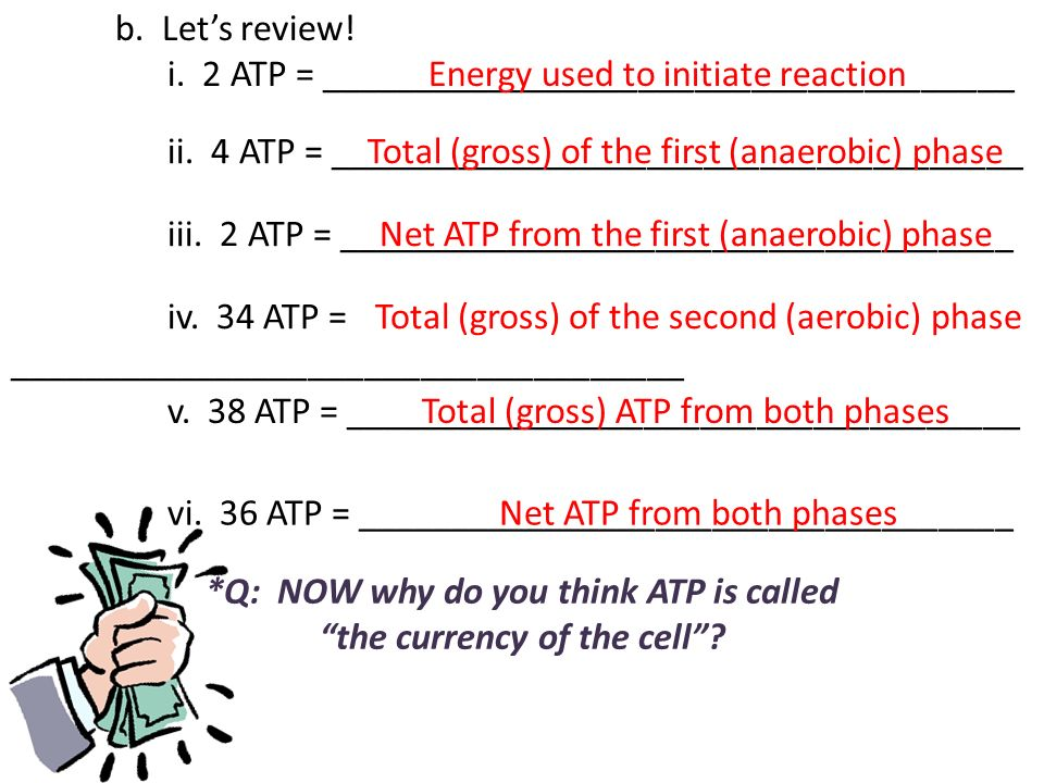 *Q: NOW why do you think ATP is called the currency of the cell