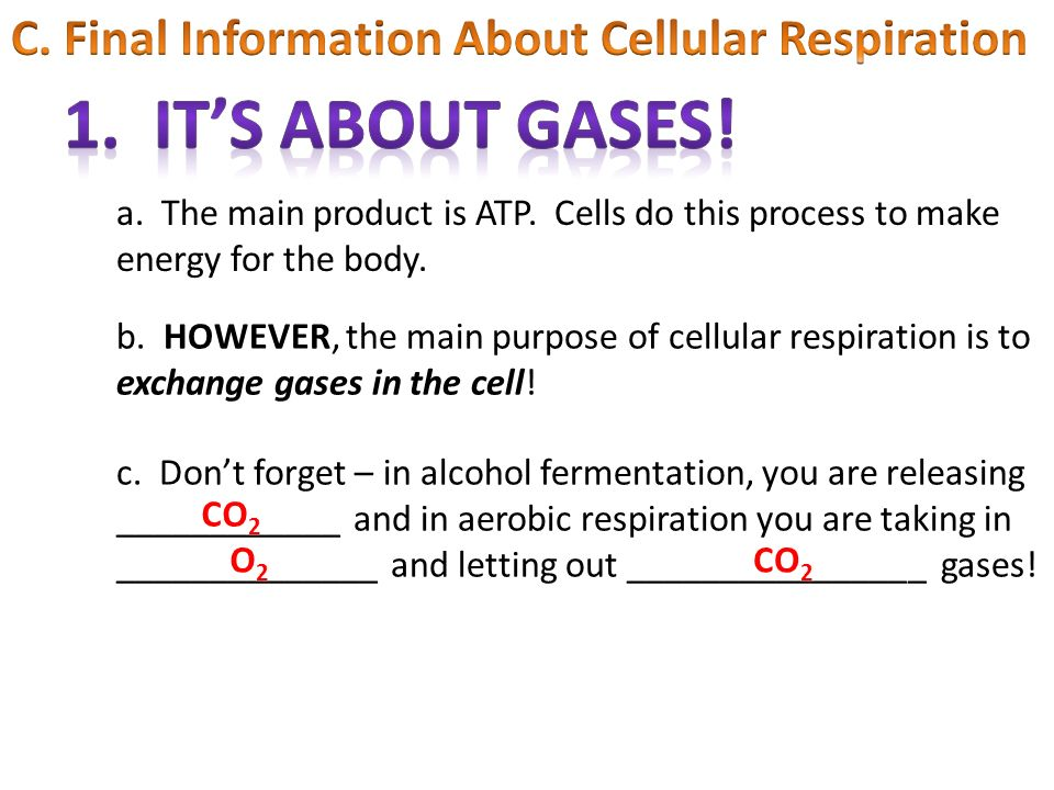1. It's about gases! C. Final Information About Cellular Respiration