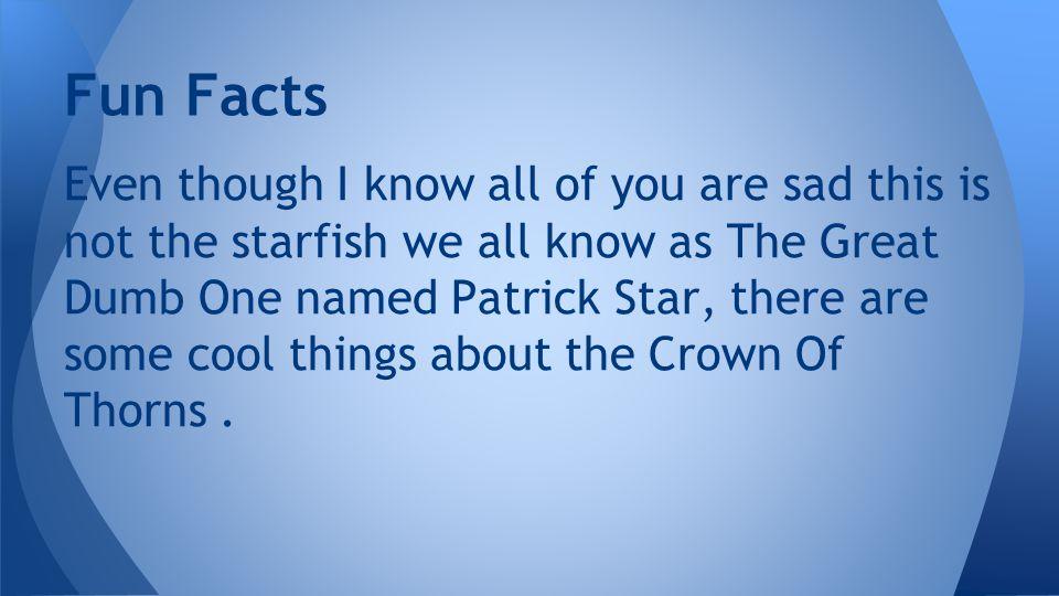 Patrick Star …. LOLZ !!!