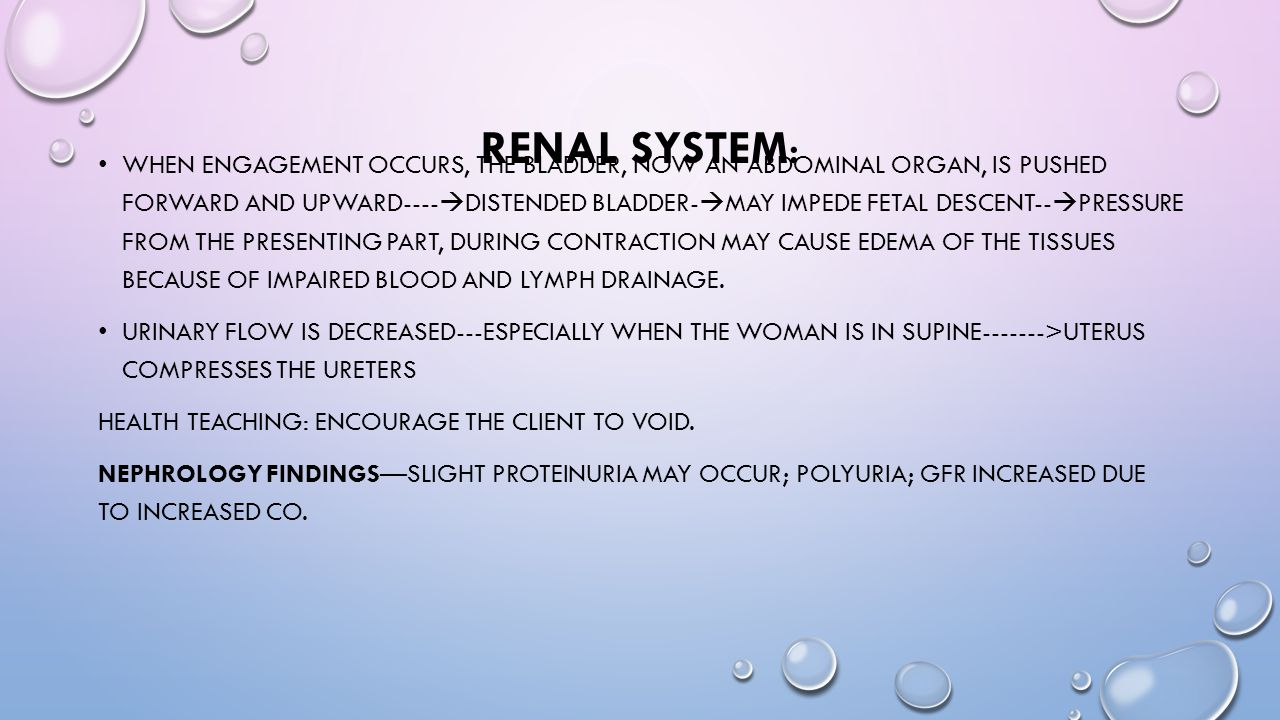 Renal System: