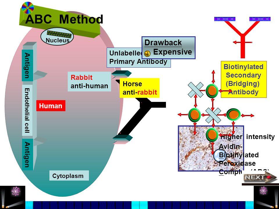 ABC Method Drawback Expensive Unlabelled Primary Antibody Antigen