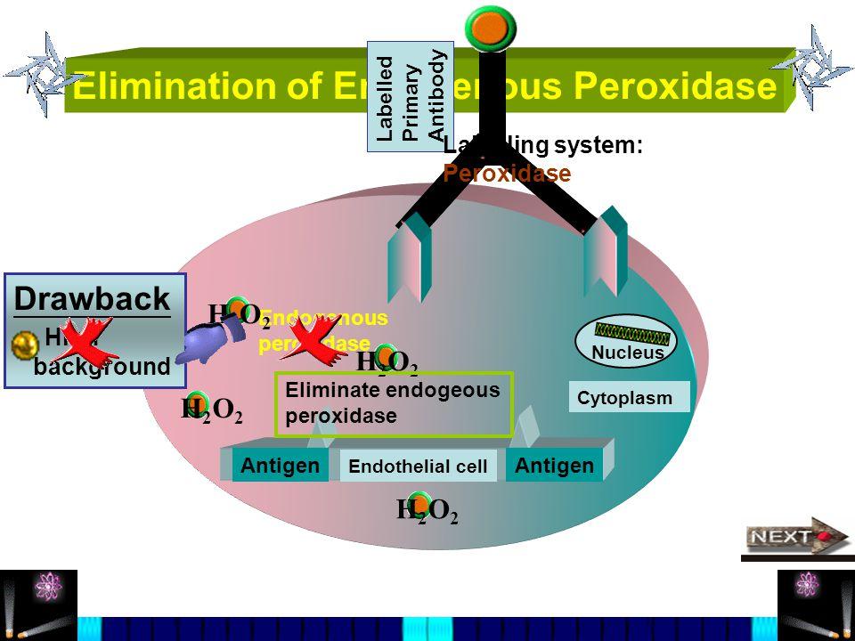 Elimination of Endogenous Peroxidase