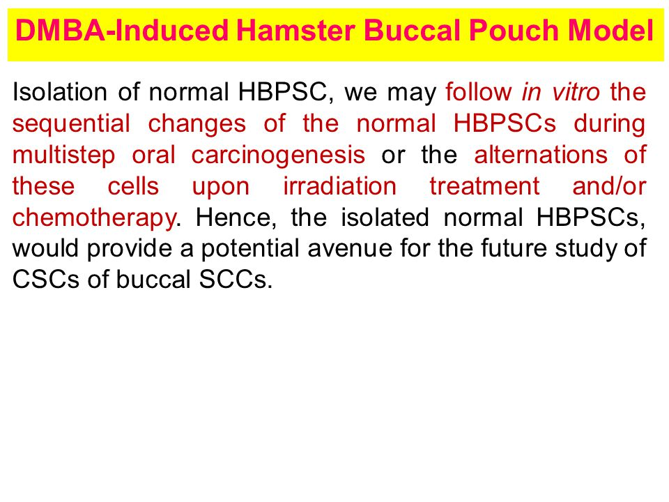 DMBA-Induced Hamster Buccal Pouch Model