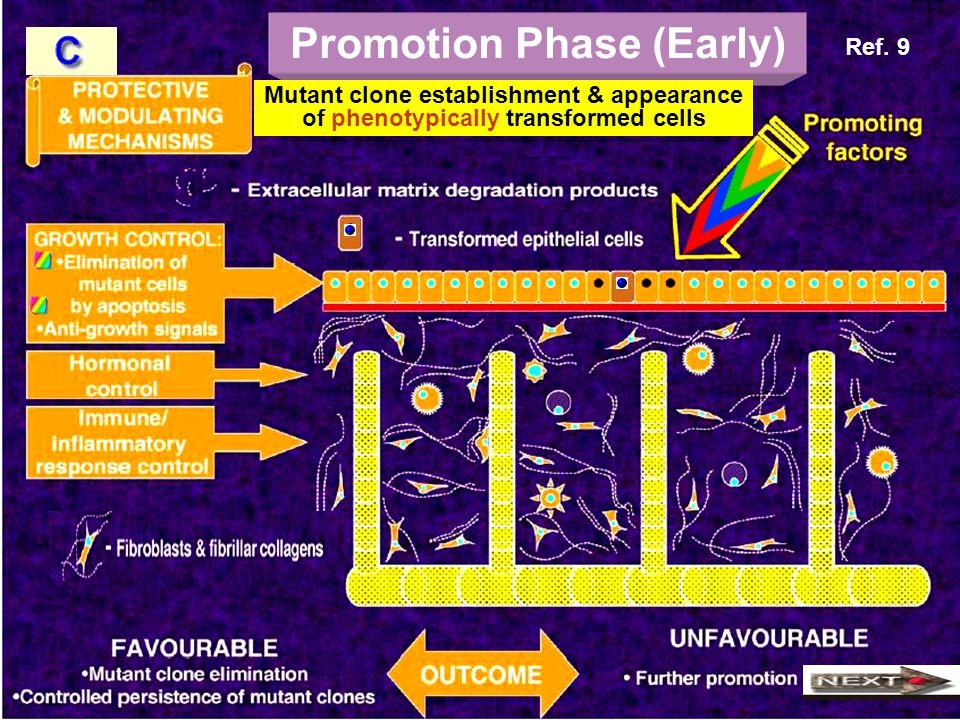 Promotion Phase (Early)